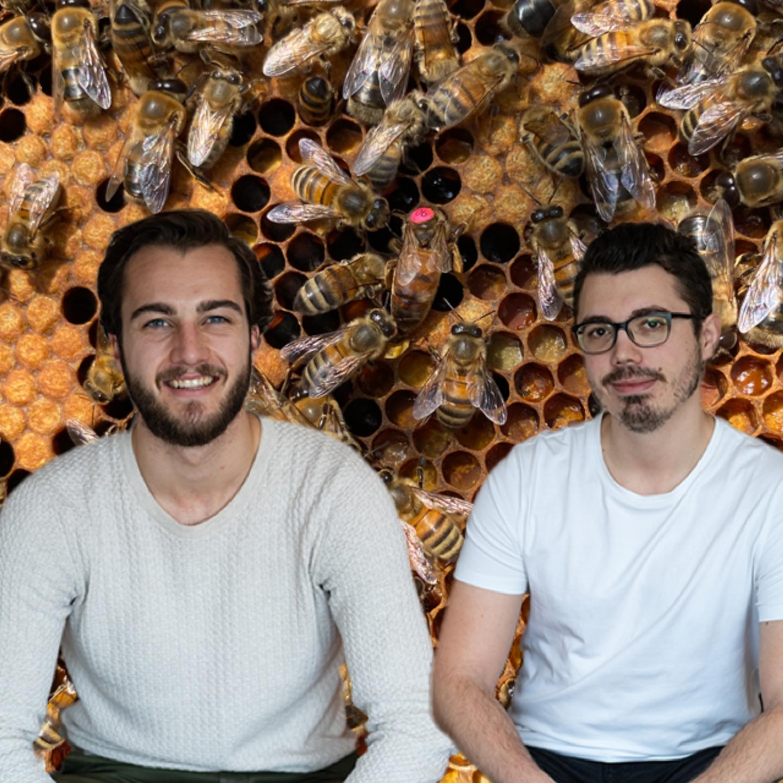 Les murs ont des abeilles