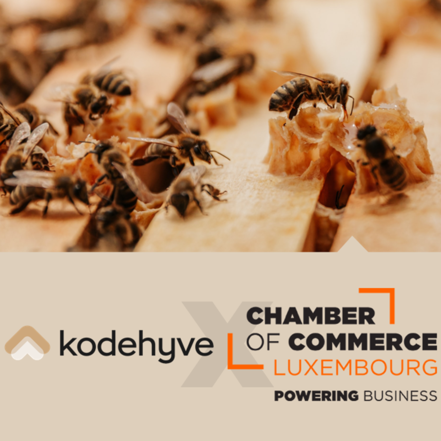 kodehyve and Chamber of Commerce Luxembourg talking entrepreneurship & bees